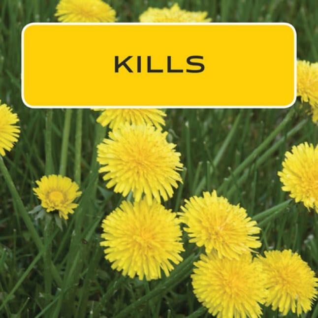 Kills dandelion and clover