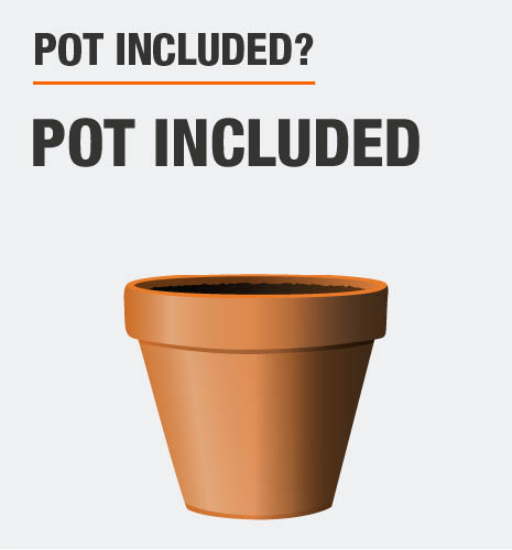 This tree includes the pot