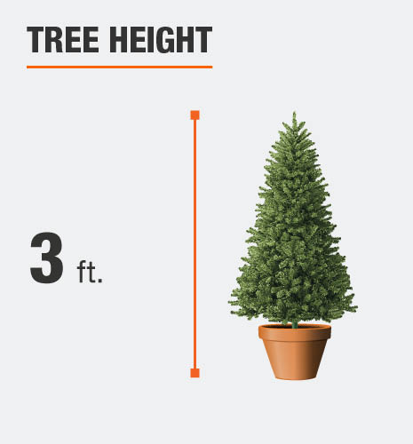 The tree height is 3 feet