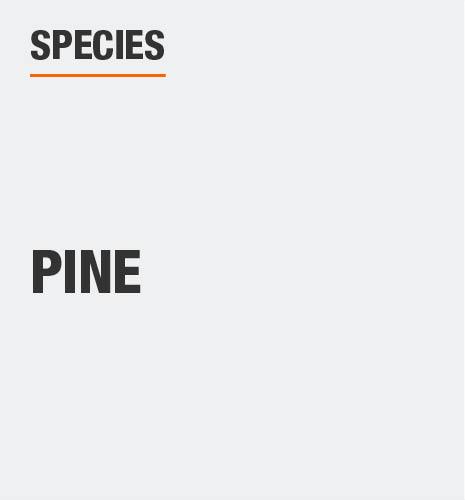 Tree species is pine