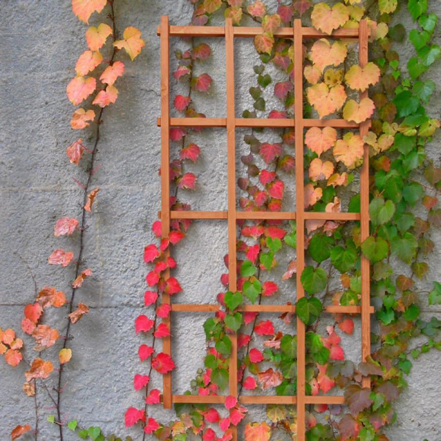 A lifestyle shot showing the trellis used against a wall helping vines climb