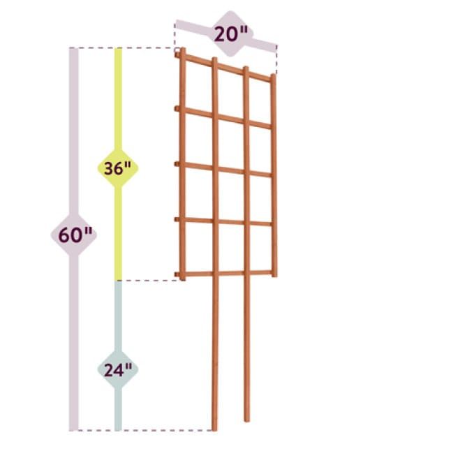 A diagram to show the dimensions of the trellis