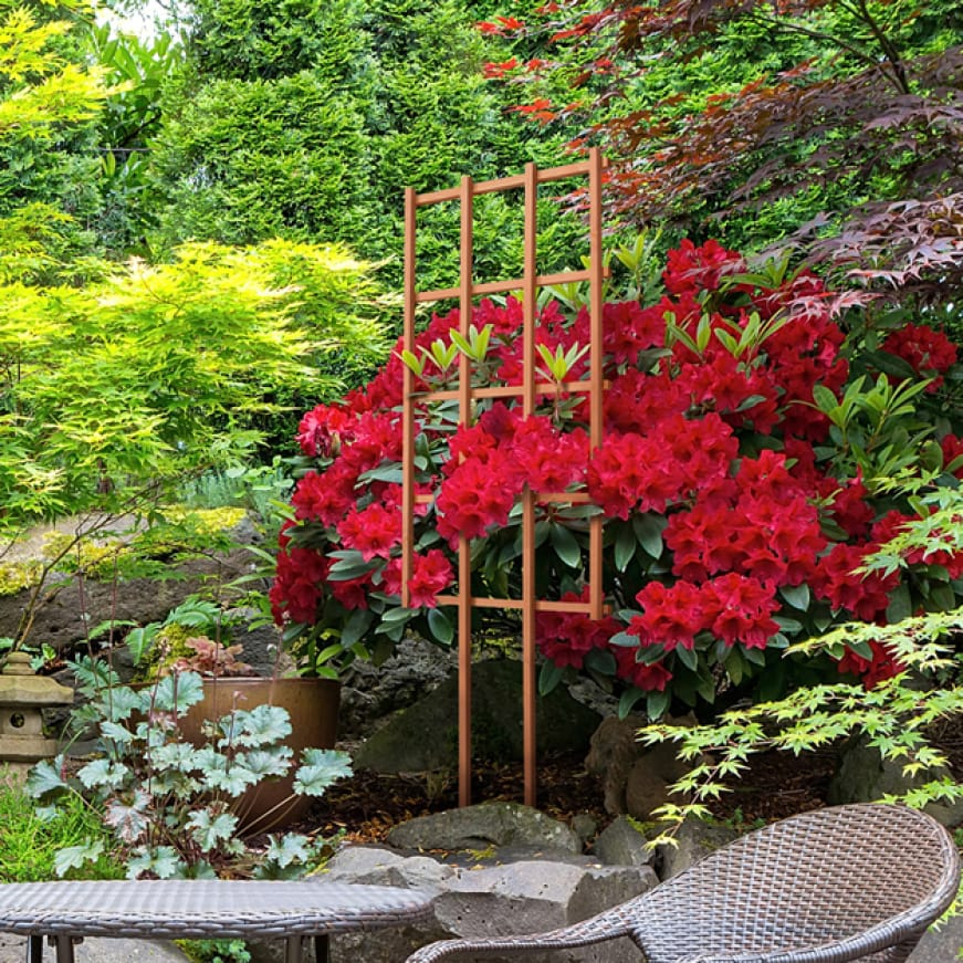 A lifestyle shot showing a large red flowering plant grow vertically