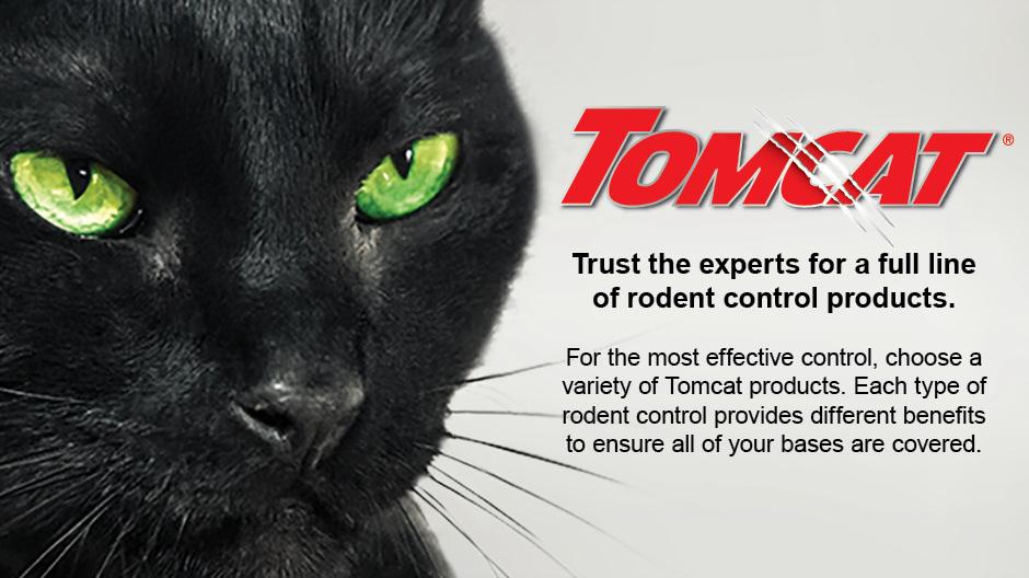 Tomcat logo and cat.
