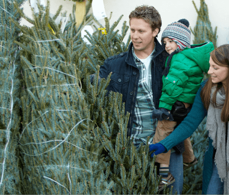 Live Christmas Tree Farm