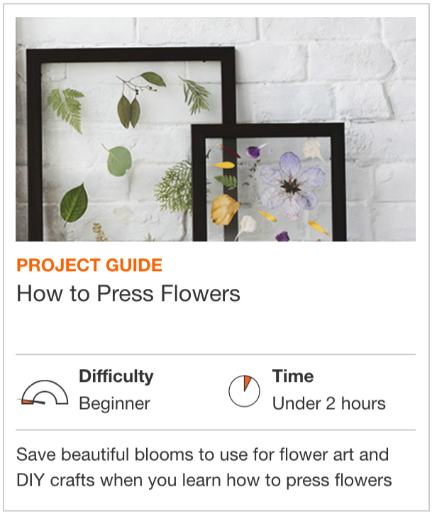 How to Press Flowers