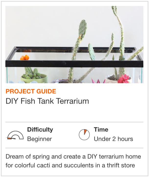 DIY Fish Tank Terrarium