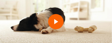 Learn more about Lifeproof Carpet with Petproof Technology
