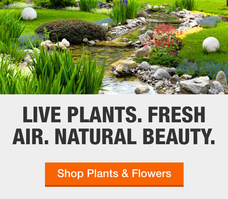 Plants Garden Flowers The Home Depot