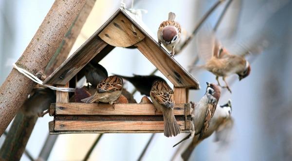Bird House Buying Guide