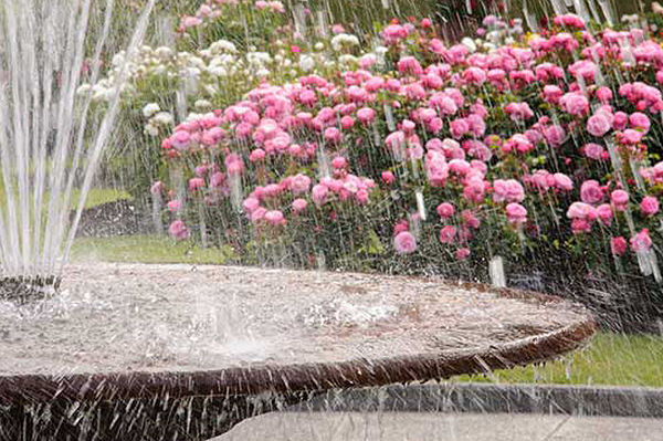 Plant a Fountain Garden