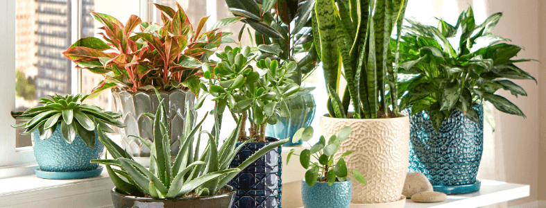We carry all types of plants, from­ succulents to bonsai trees - Shop Now