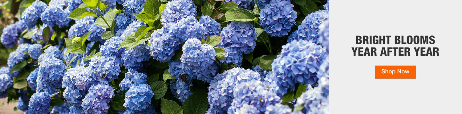BRIGHT BLOOMS  YEAR AFTER YEAR Shop Perennials