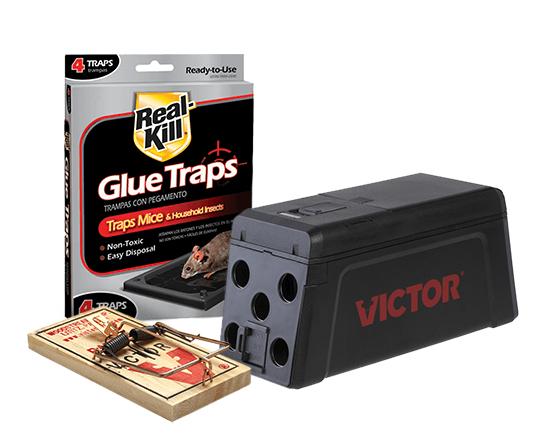 glue traps animal traps