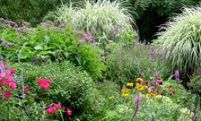 Perennial plants flowers at the home depot perennial gardening inspiration mightylinksfo